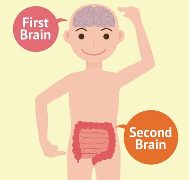 First brain second brain
