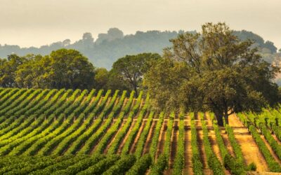Industry roll-ups or The SPAC-based IPO of Vintage Wine Estates